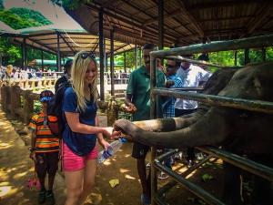 sri lanka pinnawala elephant orphange sierociniec dla sloni przemarsz sloni karmienie sloni