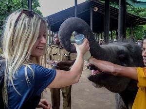 sri lanka pinnawala elephant orphange sierociniec dla sloni karmienie slonia