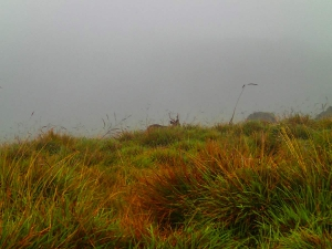 sri lanka horton plains worlds end koniec świata zwierzeta