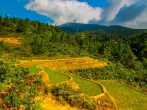 wietnam vietnam sapa lao cai pola ryżowe