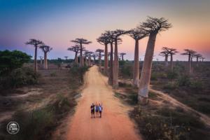 madagaskar madagascar aleja baobabow avenue of the baobabs zachod slonca dron daleko od domu
