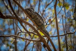 madagaskar madagascar anja community reserve kameleon