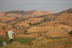 madagaskar madagascar antsirabe pola ryzowe