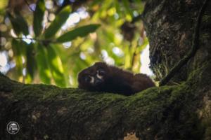 madagaskar madagascar ranomafana lemur