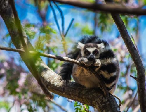 Madagaskar – Plan i koszt podróży