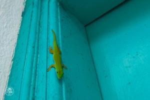 seszele seychelles praslin acquario guesthouse jaszczurka