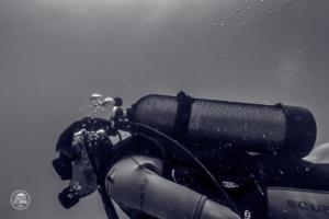 seszele seychelles praslin nurkowanie scuba diving whitetip divers marek