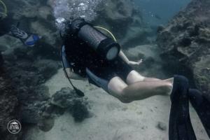 seszele seychelles praslin nurkowanie scuba diving whitetip divers rafa