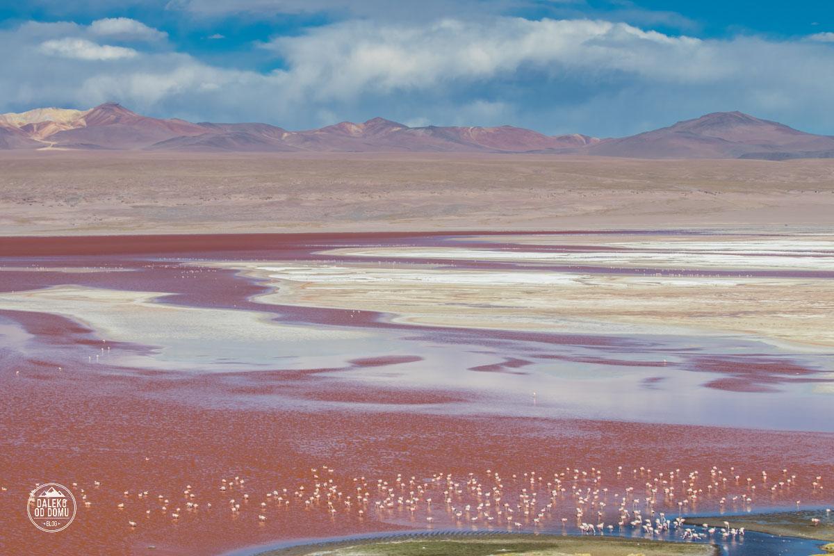 boliwia laguna colorada